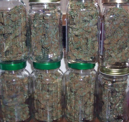 Colorado Indoor Marijuana Grow Guide The Cheap And Easy Way Denver Party Ride
