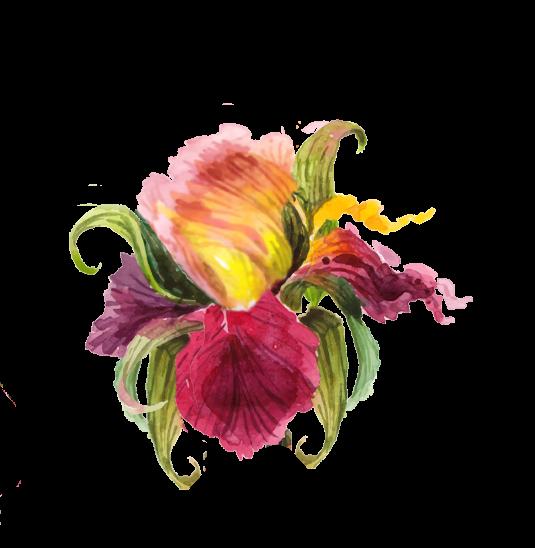 Petals Colorado
